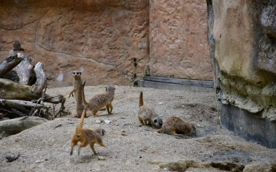 Prvošolci v živalskem vrtu